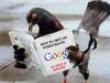Google postaja pravi živalski vrt